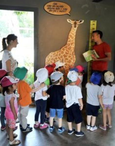 Giraffa bioparco